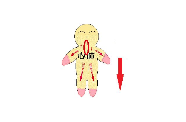 脳⇔心肺循環から全身へ血液から散り降りる図