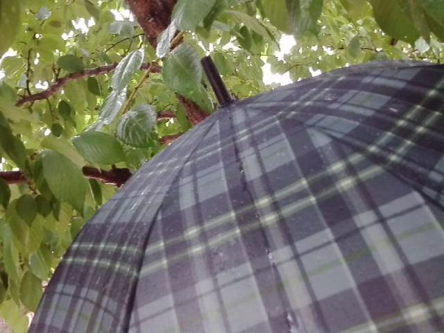 傘と雨降り
